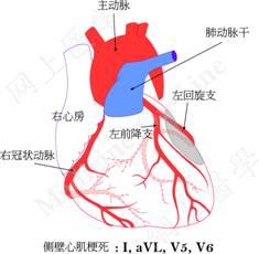 心脏血管前降支_看图识字 ECG